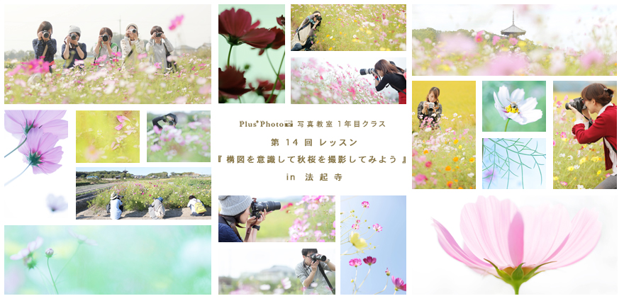 1年目クラス 第14回 「構図を意識して秋桜を撮影をしてみよう」 in 法 起 寺