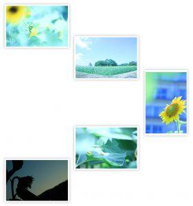 生徒作品 夏の組写真を作ってみよう! 1年目/月2回クラス
